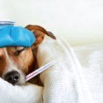 Cómo diferenciar una gripe de un catarro  🔎